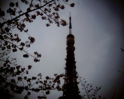 サクラに包まれた東京タワー:Entry
