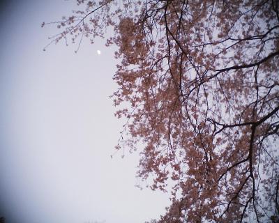枝垂れ桜と月:R2