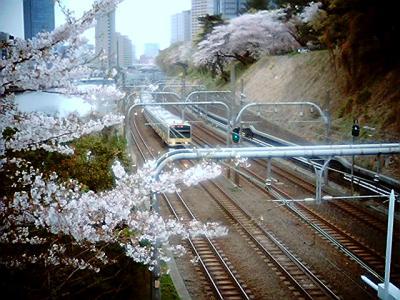 桜の下の中央・総武緩行線:Entry
