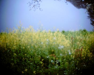 皇居のお濠の菜の花:Entry