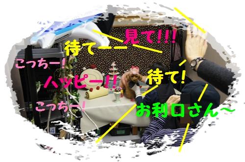 DSC07402c.jpg