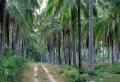 coconutplant3.jpg