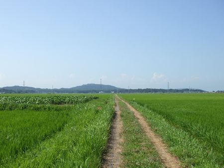 kamiakai8.jpg