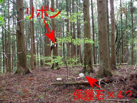 shizugawa-o6.jpg