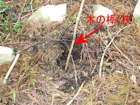 shizugawa-o8.jpg