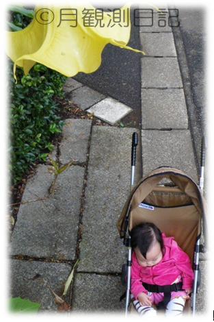 20101031tsuki4.jpg
