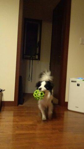 ボール遊び