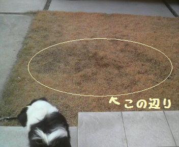 芝生が・・