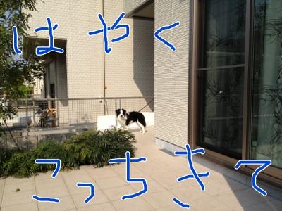 fc2blog_2012041212330886f.jpg