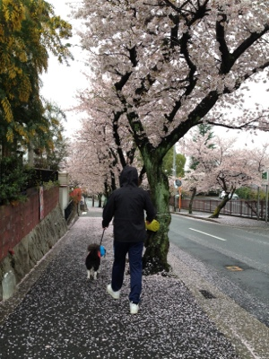 fc2blog_20120420105605afe.jpg