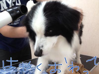 fc2blog_20120501171425ffb.jpg