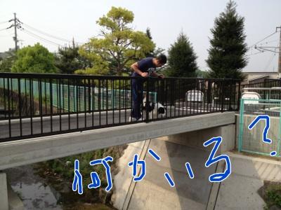 fc2blog_2012050815243000d.jpg