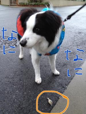 fc2blog_20120621141010cdb.jpg
