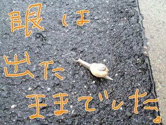 fc2blog_20120621142950e94.jpg