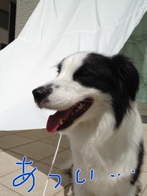 fc2blog_20120824172715e17.jpg