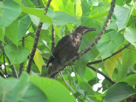 鳥・木立の中