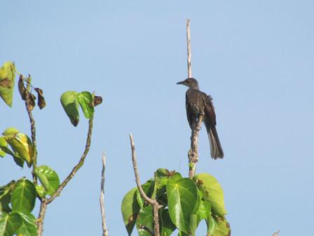 野鳥一本木