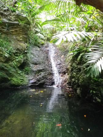 採用ミニ滝