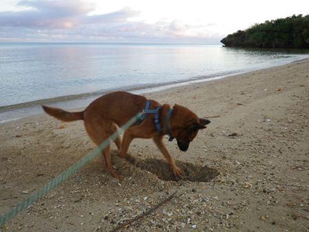 モカ浜散歩