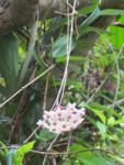 白い花(小)