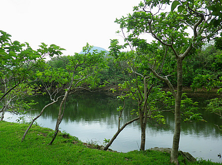 淡水池トリム