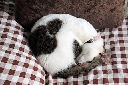 ハナ風邪薬睡眠