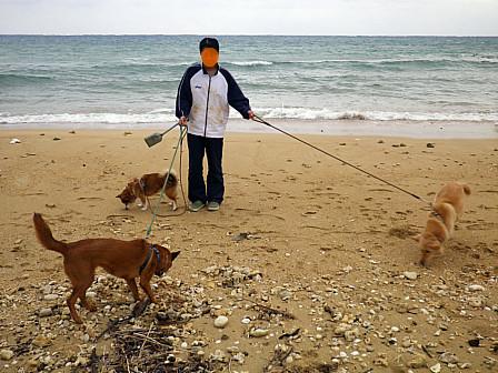 3匹散歩浜
