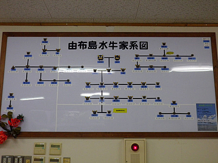 水牛家系図
