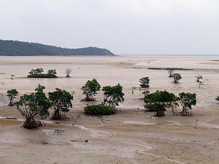 マングローブ浜