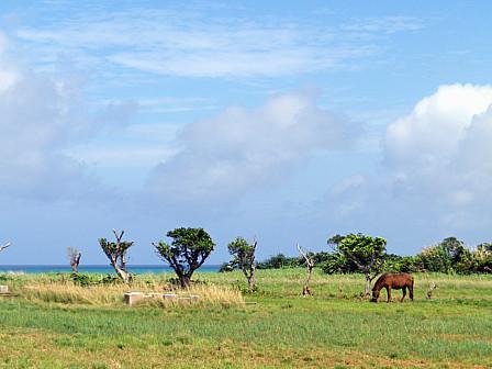 牧草地の馬