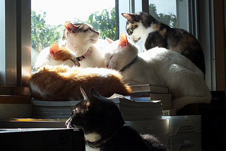 3月28日猫窓辺
