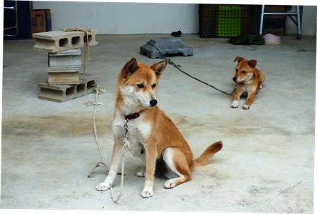 母犬と子犬