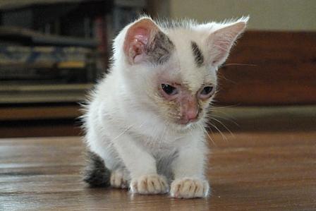 6-7保護子猫UP