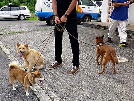 予防注射の犬たち
