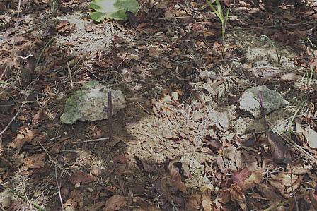 宮良兄弟猫の連墓