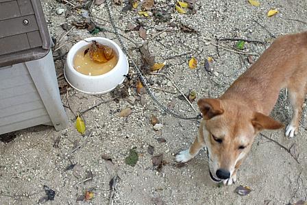 子犬水飲み器