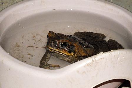 カエルさんの水浴