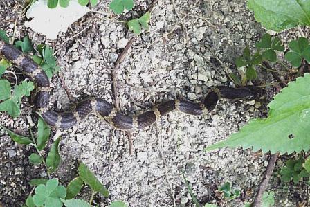 12-7-13蛇