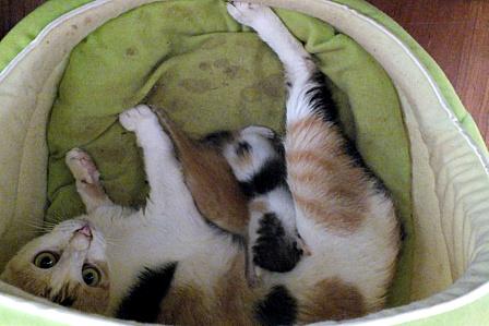 猫ハウスのもも一家