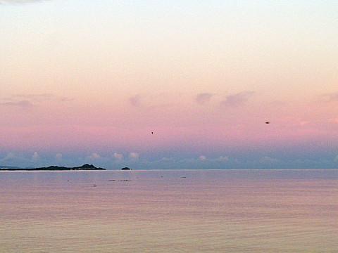 ピンクい海