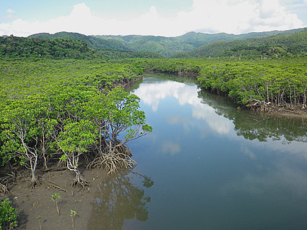 川とマングローブ
