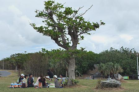 木陰の交流