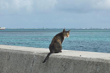 海を見ていた猫