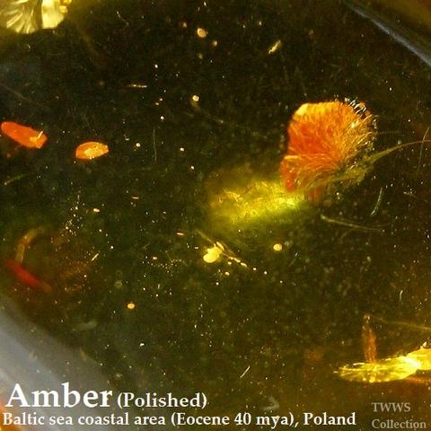 琥珀_ポーランド1