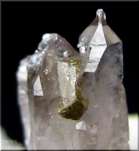 松茸水晶_イタリア1アップ4