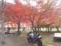 朽木紅葉スポット