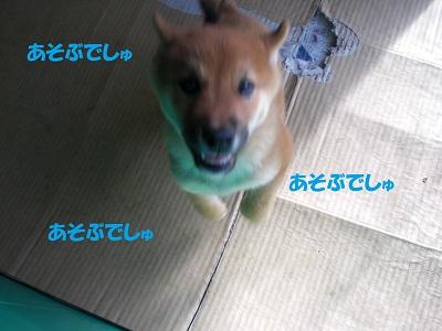 CIMG5762.jpg