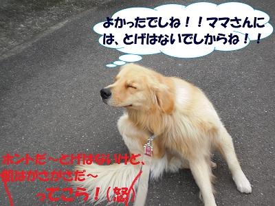 CIMG6331.jpg