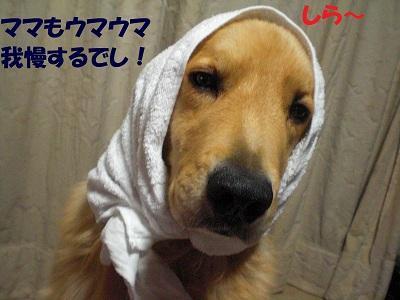 CIMG6695.jpg
