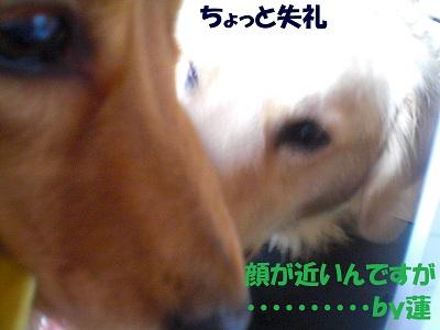 CIMG6947.jpg